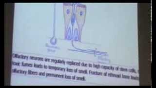 Dr Gihan Respiratory System (Conducting Portion) 7-10-2013