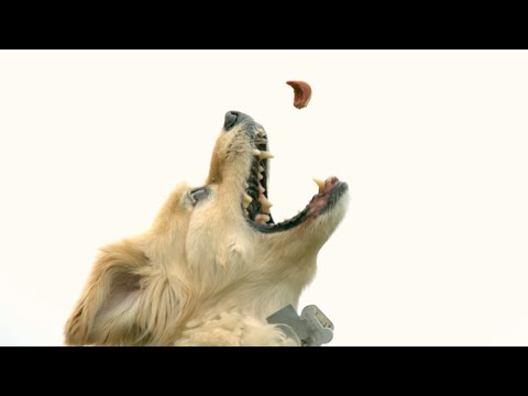 download Leaping Slow Motion Doggy - The Slow Mo Guys