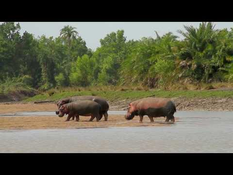 Abercrombie & Kent: Luxury Safari, Saadani National Park, Tanzania