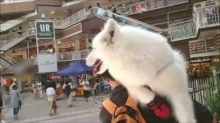 ワンちゃんOKの三井アウトレット かわいいワンちゃんに会ったよ☆彡.