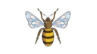 Как нарисовать пчелу: инструкция от EvriKak