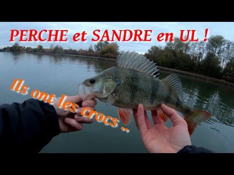 Pêche de la PERCHE et du...
