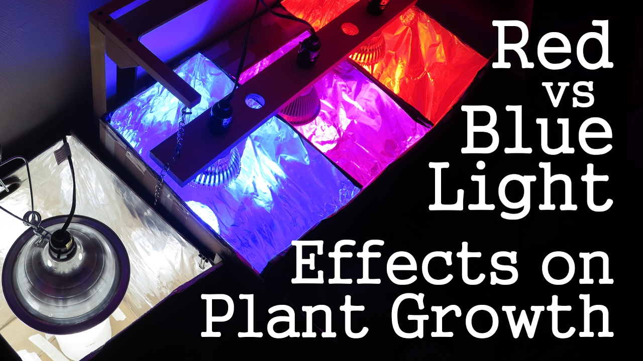 light affect on plant growth The effect of light and temperature on plant growth björn karlsson and jacob schoville uw-biotron.