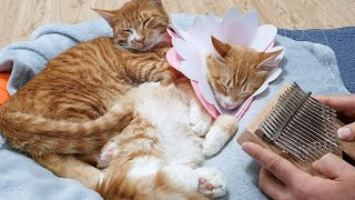 고양이와 칼림바 연주(아이유-마음을 드려요)