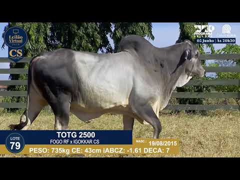 LOTE 79