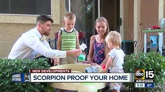 Pest control expert helps Mesa woman with scorpion infested apartment