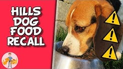 Deadly Diet - The Hills Dog Food Diet Recall - Dog Health Vet Advice