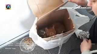 В магазин города Обь подбросили коробку с котятами  Help the animal shelter