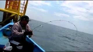 Mancing Strik Ikan Talang Talang Di Dekat Pengeboran Minyak Tengah Laut