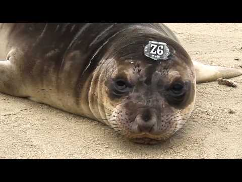 The Marine Mammal Center: A Community of Support