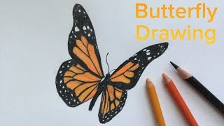 butterfly monarch drawing easy side draw step drawings abstract