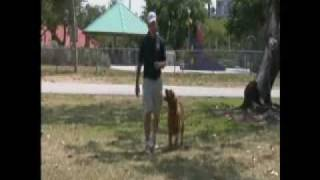 Amazing Dog Training Dvd : Introducing  How To Walk Your Dog!