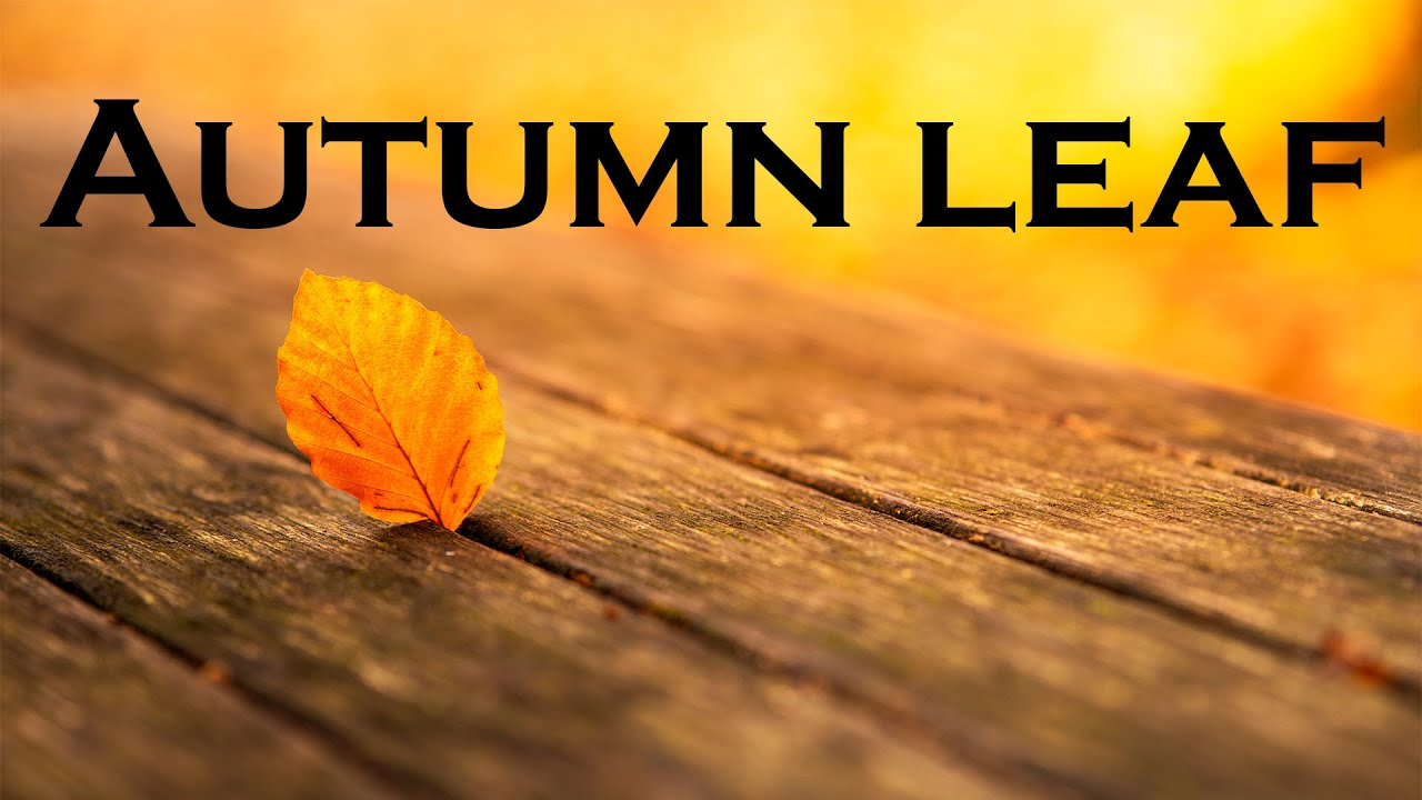 Relax Music Beats 🍁 Autumn Leaf - Lofi Chill Jazzy Beats to Study, Work and Relax