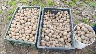 Сажаем картошку с помощью трактора т-25