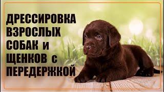 Фото Дрессировка собак с передержкой