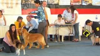 """""""perros En Acción"""" La Pampa Kennel Club"""