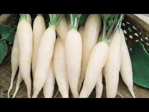 Как посадить редис. Несколько простых правил / Секреты хорошего урожая / Как вырастить крупный редис