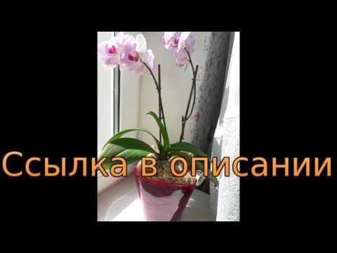 в какое время года можно пересаживать орхидею