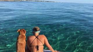 Crossing the Gulf Stream | Dog Vlog #3