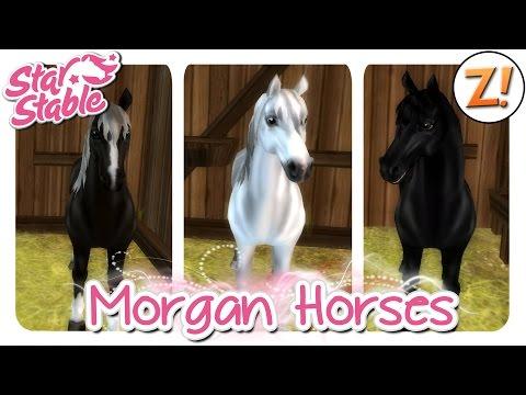 Star Stable SSO: Neue Morgan Horses Update 26.08.2015  Let's Play ♥ GERDEU