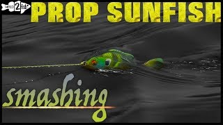 When to Fish Bluegill-Imitating Prop Baits for Spring Bass