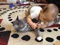 Смешные Видео Приколы с Котами. Смешные Коты до Слез. Смешные Животные 2019. #20