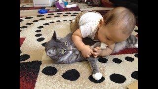 Смешные Видео Приколы с Котами. Смешные Коты до Слез. Смешные Животные 2019. 20