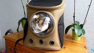 Rucksack für Katzen - Ich teste ihn!