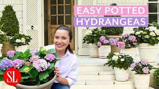 Try These Potted Hydrangeas for an Easy Curb Appeal Refresh | Hey Y'all | Southern Living