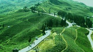 kanyam tea garden Ilam Nepal