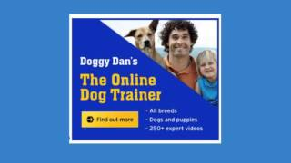 Doggy dan dog training user reviews - how quickly does dog training work?