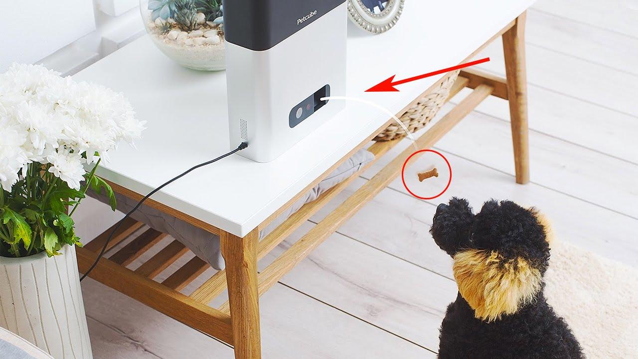 """Résultat de recherche d'images pour """"petcube bites"""""""