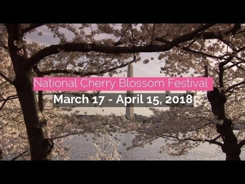 Welcome to the 2018 National Cherry Blossom Festival