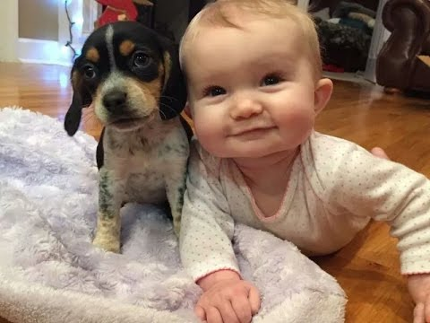 Thumbnail: funny Babies and Puppies Playing Together Compilation 2016 , best babies vs dogs animals 2016