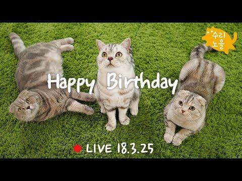 [생방송]라온 이즈 소울 생일파티! 수리노을 고양이가족 2018년 3월 25일 【SURI&NOEL】