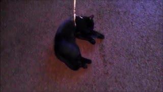 Шоколад Аленка  Кошкин дом смешные коты и кошки Funny animals. 可爱的深情家蓬松软俏皮棘手宠物猫