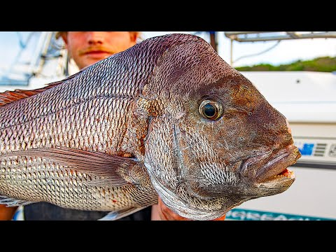 Quest For A Snapper In Every Month Of The Year