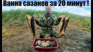 Кастинговая сеть американского типа  + эхолот и ванна сазанов за 20 минут ЁКЛМН Вот это рыбалка 2020