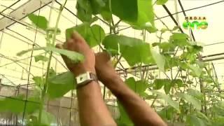 Polyhouse farming in Kerala