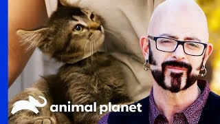 Jackson Galaxy Is On A Mission To Rehome 50 Adorable Kittens! | My Cat From Hell