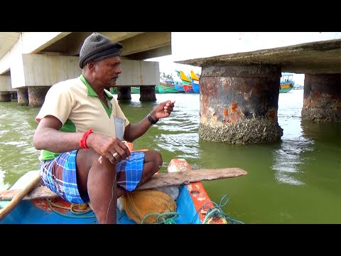 Fishing Under Bridges Caught A Groupers & Mangrove Jack