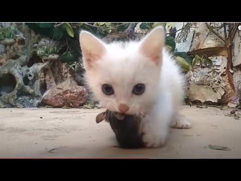 Первая мышь крохотного котенка!