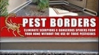 Scorpion Pest Control Scottsdale Arizona
