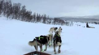 ノルウェー トロムソ にて犬ぞりを体験.