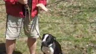 Dog Training - The Secret To Loose Leash Walking