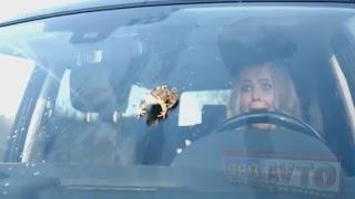 Осторожно, тупые дуры за рулем  Типичные блондинки