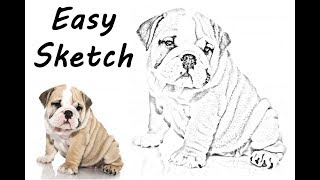 Dog Sketch | Pet Portrait Drawing | Pet Portrait Photoshop Tutorials | Pet Portrait Photoshop
