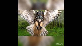 познавательное видео про сову