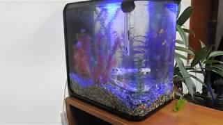видео Аквариум в офисе
