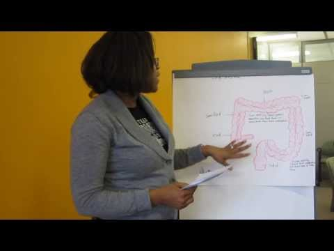 The Gastrointestinal Tract